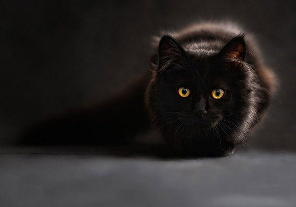 Если черный кот дорогу перейдет